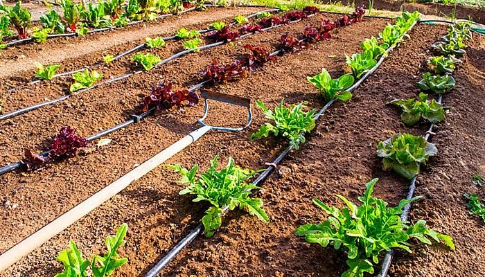 Простая система для полива огорода