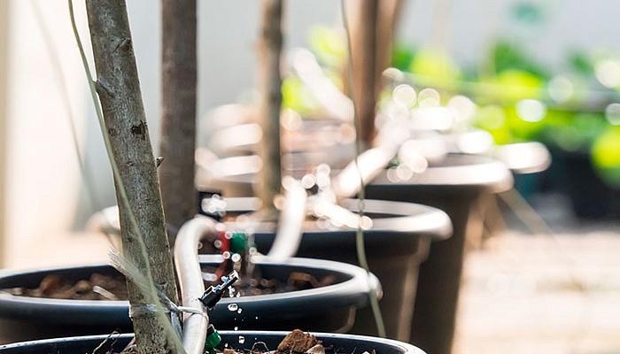 Установленная система полива саженцев